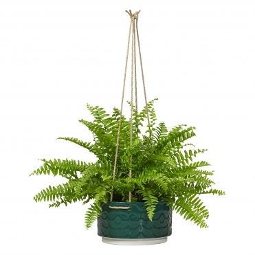 60s Stem Ceramic Hanging Plant Pot Large - Evergreen