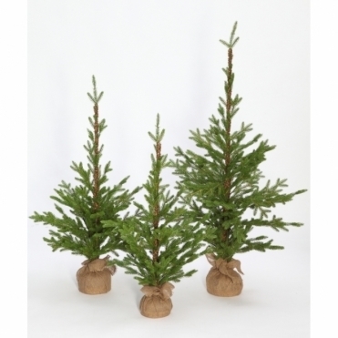 Christmas Tree 1m - Wexford Pine