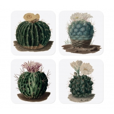 Botanical Cacti Coasters in Gift Box - Set of 4