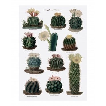 Botanical Cactus Tea Towel