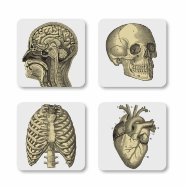 Biology Drink Coasters Set of 4 in Gift Box