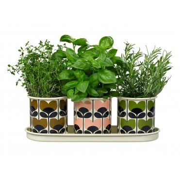 Climbing Rose Enamel Herb Pots - Set of 3 with Tray